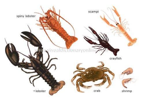 Example-of-class-crustacean